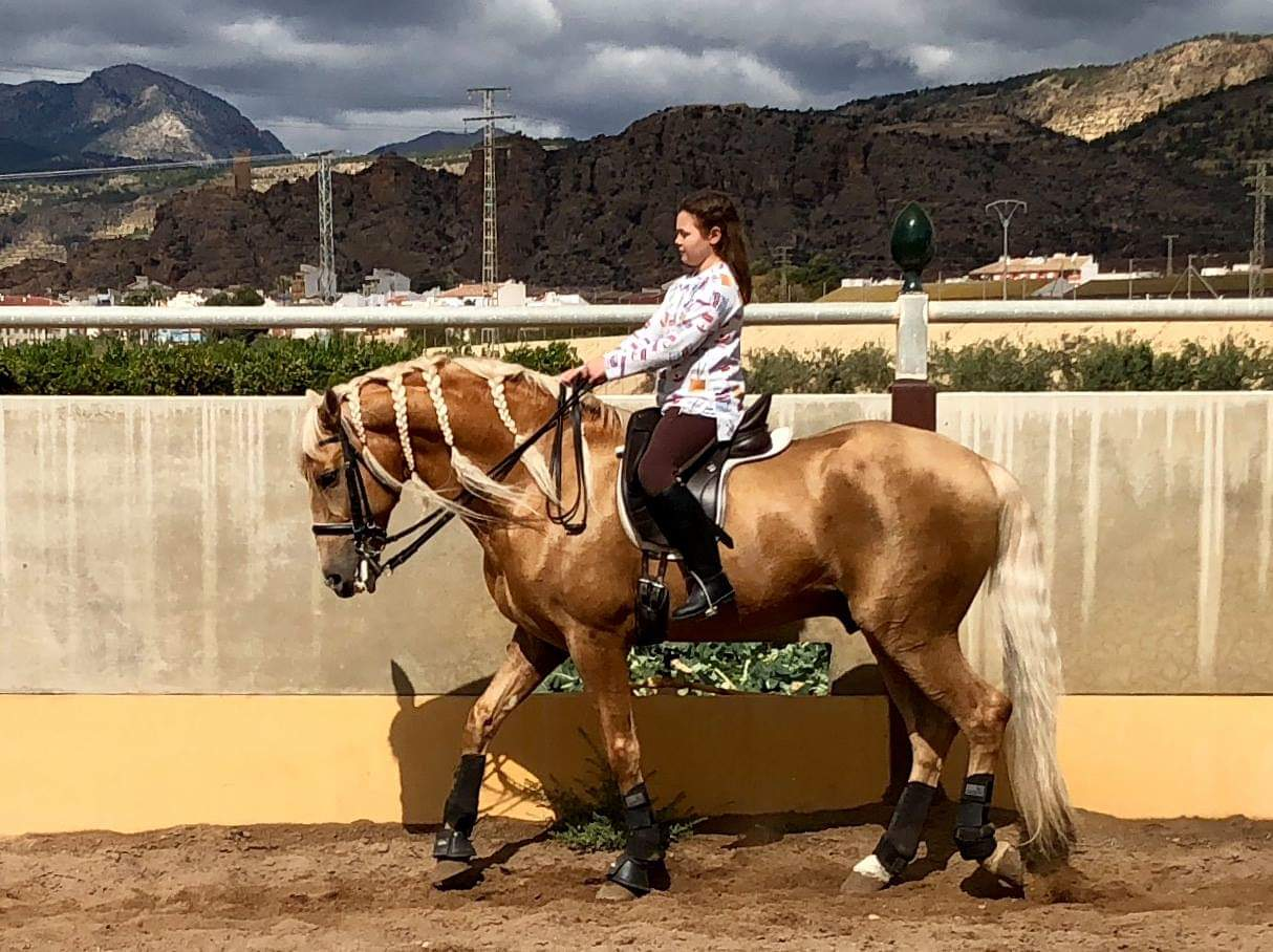 palomino horse for sale